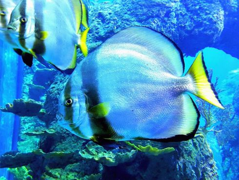 aquarium32
