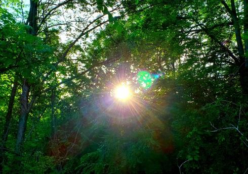 sunshinetrees