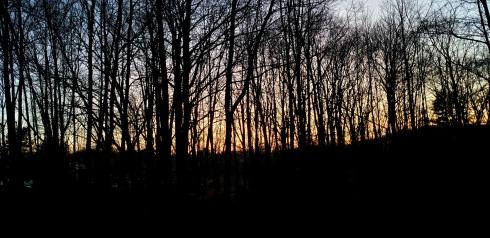 darktrees2